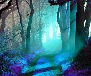 woods - blue - image