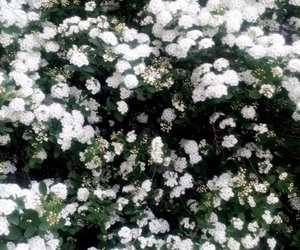 flower, spring, and white image