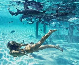 summer, beach, and shark image