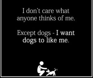 funny, quotes, and dog image