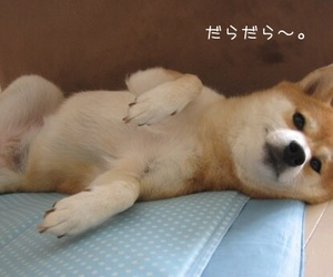 aesthetic, dog, and cute image