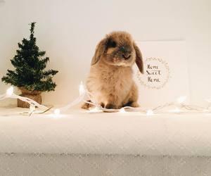 animal, bunny, and christmas image
