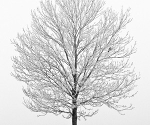 snow, tree, and white image