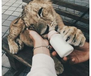 alternative, baby tiger, and cute image