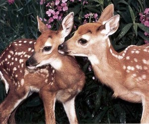 deer, animal, and bambi image