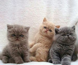 cat, kitten, and kitty image