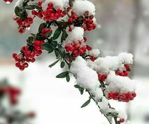 snow, winter, and tumbir image