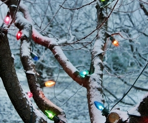aesthetic, christmas lights, and forest image
