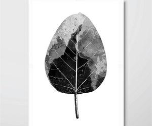 botanical, black and white art, and monstera image