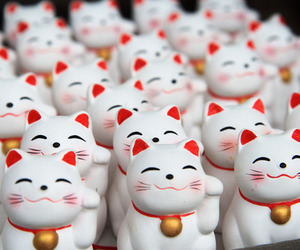 cat and japan image