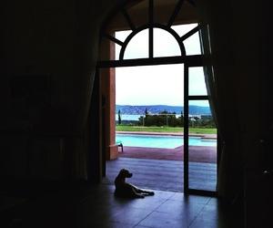 chien, mediterranean, and piscine image