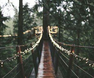 light, bridge, and nature image