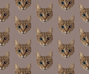 cats image