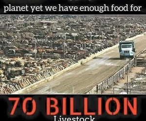 hunger, poverty, and vegan image