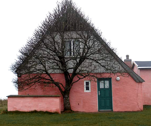 tree and house image