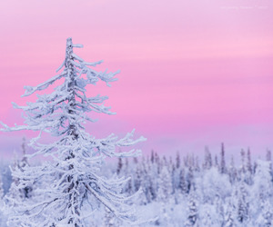 pastel, tree, and winter image