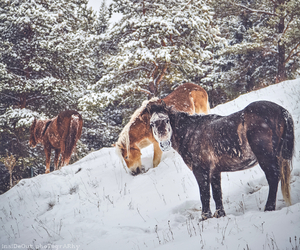 animals, cold, and horses image
