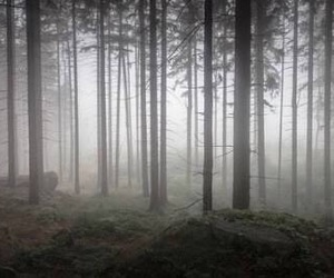 dark, dreams, and forest image