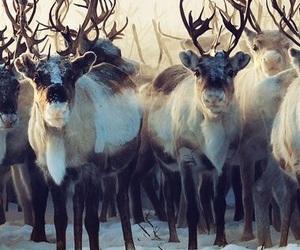 reindeer, winter, and christmas image