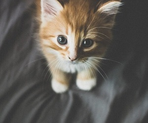 kitten and cute image