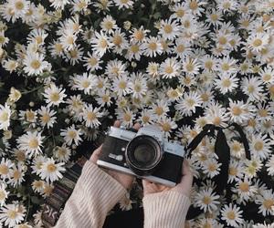 daisy, film camera, and minolta image