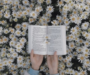 daisy, flower, and reader image