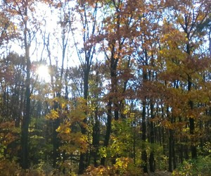autumn, nature, and trees image