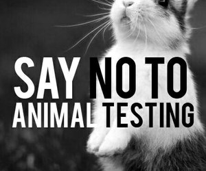 vegan, animal, and animal testing image