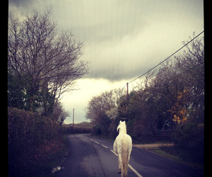 horse, road, and white image