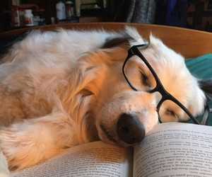 dog, animal, and book image