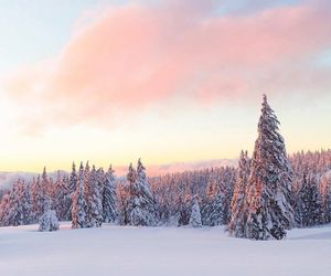 pink and snow image