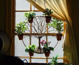 plants and window image