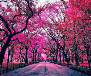 beautiful, pink, and love image