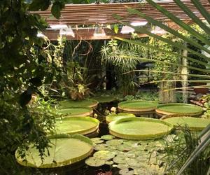 botanic, tropic, and botanisk hage image