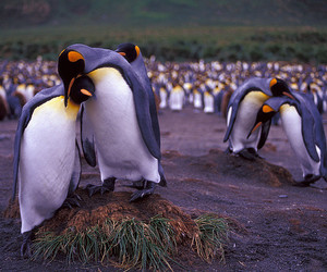 Antarctic, antarctica, and getty images image