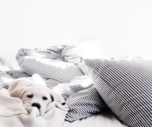pillow and relax image