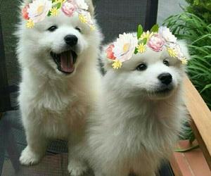 dog, doggo, and puppy image