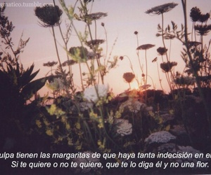 love, frases, and margarita image