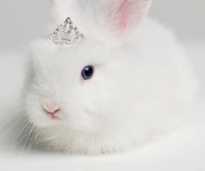 rabbit, bunny, and white image