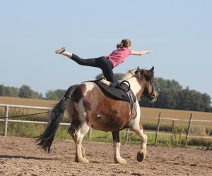 equitation, horse, and voltige image