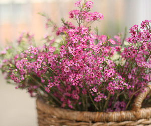 basket, flowers, and photograph image