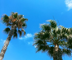 palmtrees, spain, and summer image