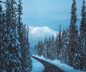 forest, road, and white image