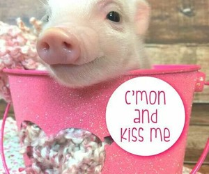 animals, bacon, and pets image