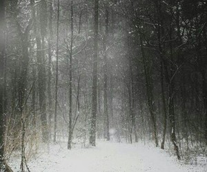 forest, snow, and magic image