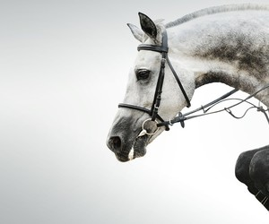 equitation and france image