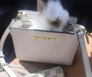 animal, bunny, and Michael Kors image
