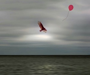 balloon, bird, and sea image