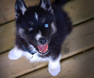 adorable, dog, and pet image