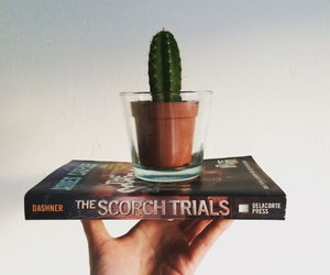 book, instagram, and cacti image